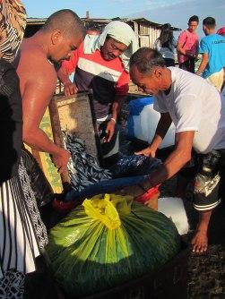Fishermen Harvest